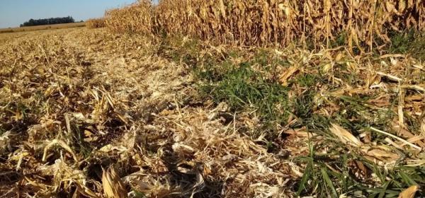 Pedido da Aprosoja/MS pode prevenir fogo em propriedades rurais