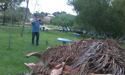 Árvores do Parque da Cidade estão morrendo