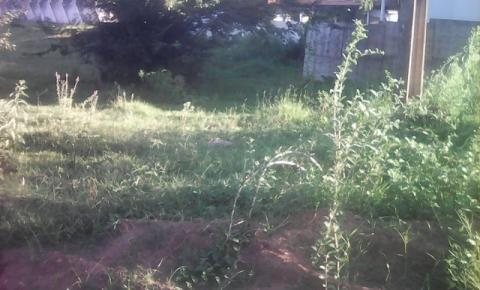 Moradores reclamam do mato alto