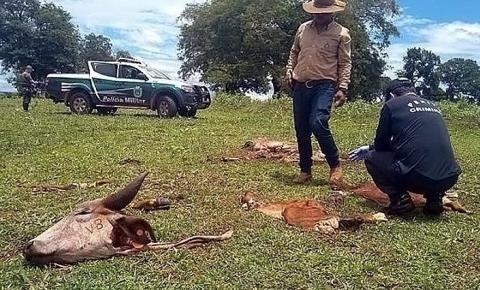 Delegado que atuou em Amambai assume delegacia especializada em crimes rurais em MS