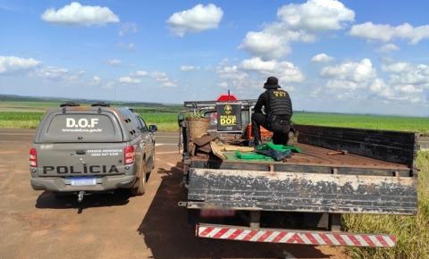 Camionete com mais de meia tonelada de maconha foi apreendida pelo DOF