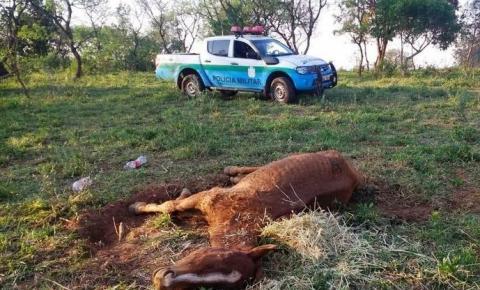 PMA autua infrator por maus tratos a animal