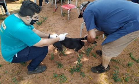 Vacinação Antirrábica imunizou mais de 8 mil animais no município